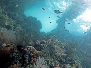 2012_07_27-Raja-Ampat-Coral-Triangle-photo-Lakshmi-Sawitri-Flickr-Creative-Commons